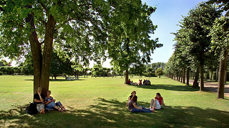 Visitors relaxing under shady trees on a meadow of the park.