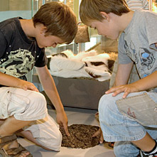 Two boys touch the artifical cast of cow droppings.
