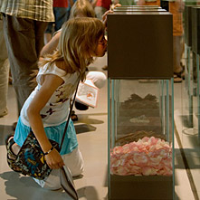 A girl sniffs on an exhibit with rose blosoms